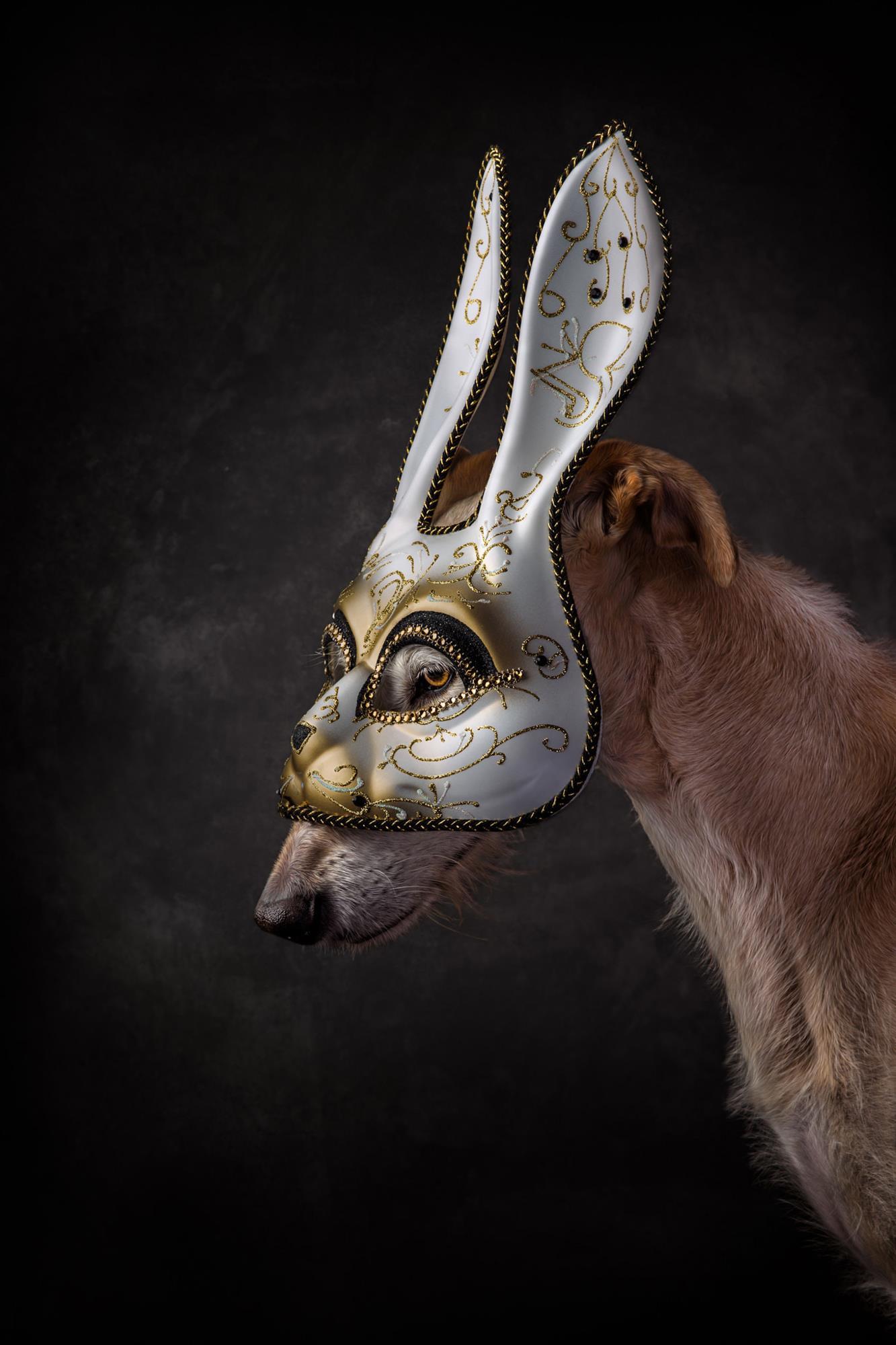Pet Photography - Masked Dog